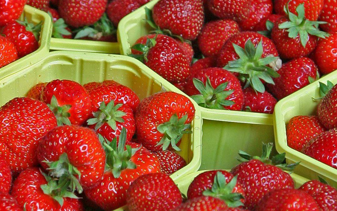 Bald beginnt die Erdbeerzeit!